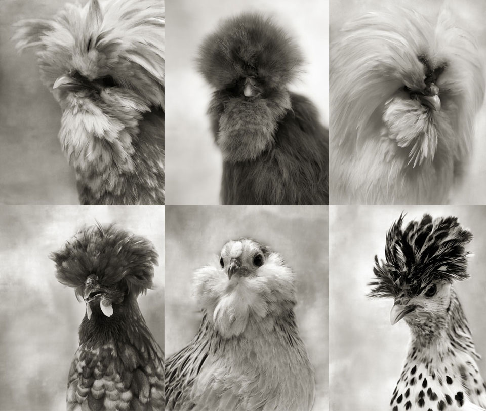 Birds - Inspiration for Valérie Barkowski