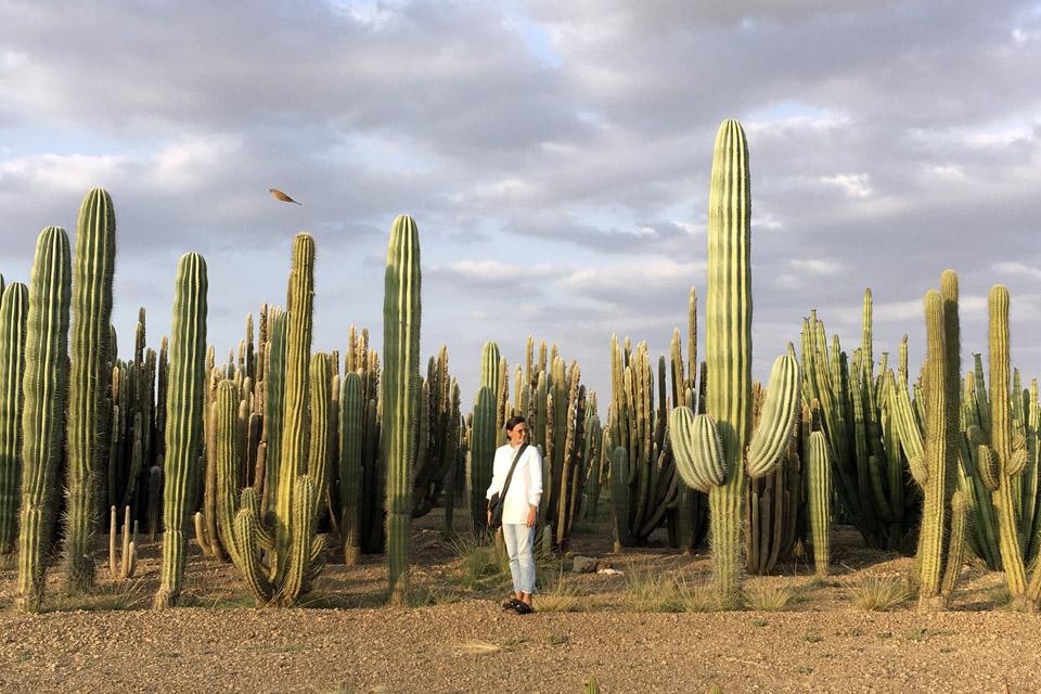 cactus-marrakech-inspiration-valerie-barkowski