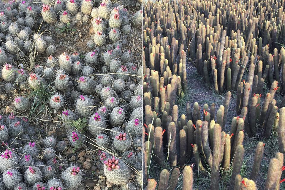 cactus-green-marrakech-inspiration-valerie-barkowski
