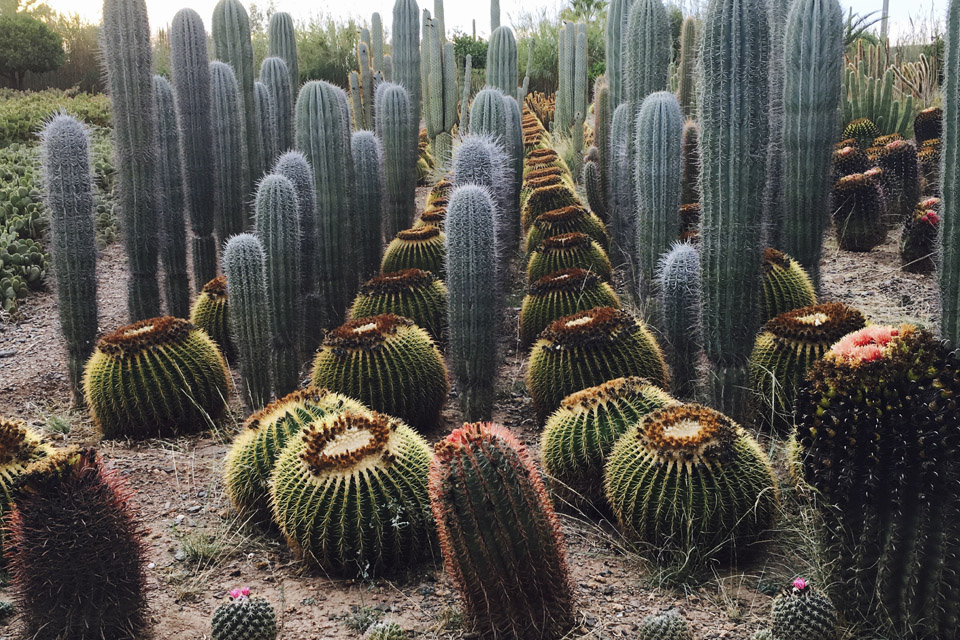 cactus green inspiration thiemann marrakech