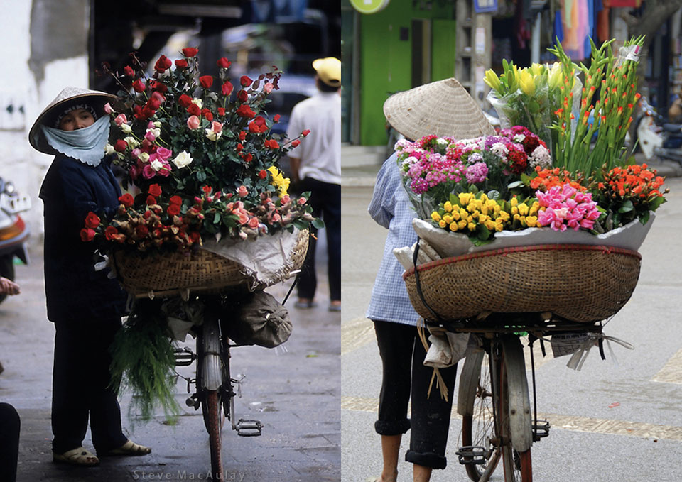 flower bicyles photos